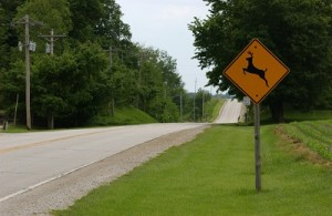 Picture of road with deer crossing sign.